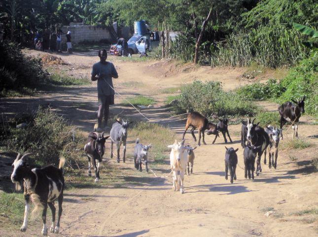haiti-my-pics-080a-2_zps955b27a4
